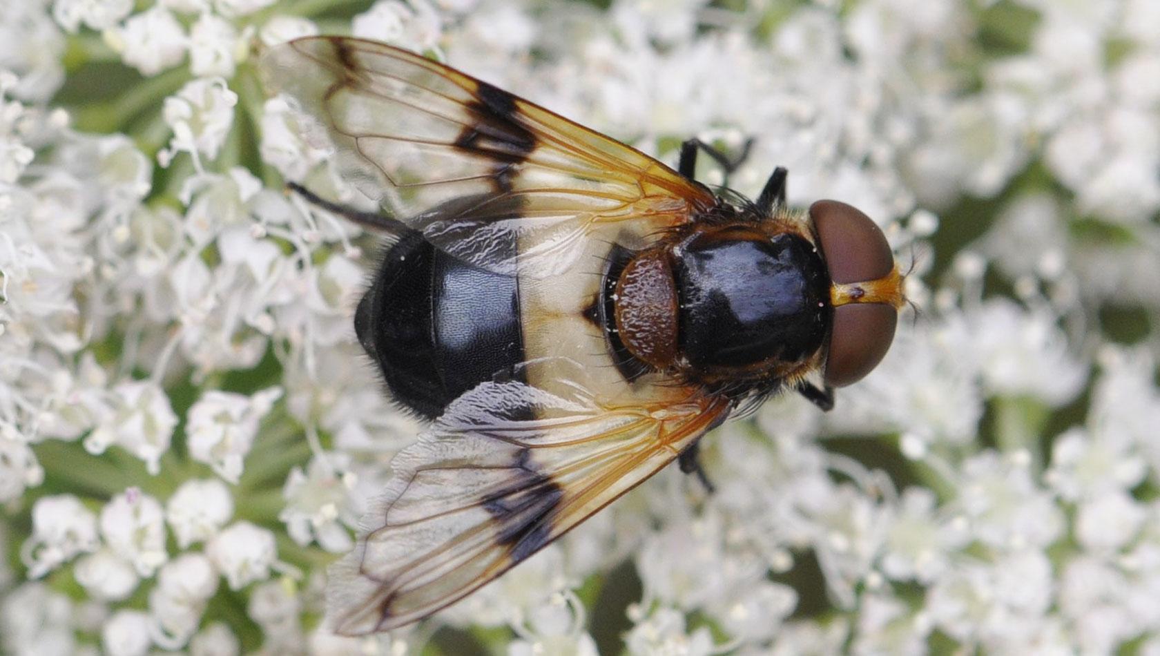 insekten_4